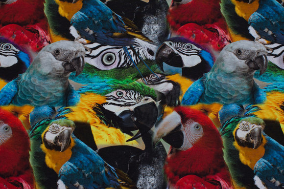 Cotton-jersey with lots of parrots