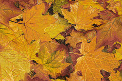 Beautiful furniture-tapestry with golden fall leaves