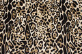 Scuba jersey with cheeta print in sand and black