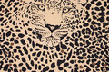 Cheeta panel (front- and back-piece) cotton-jersey in beighe and black
