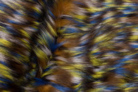 Long-haired, faux luxus fur in blue, yellow and brown