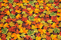 Patchwork-cotton with fall leaves.