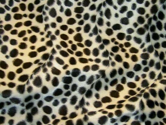 Dalmatians with black spots