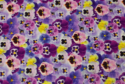 Cotton-jersey with purple mother-in-law-flowers