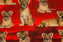 Lion Cubs are ca. 4-8 cm.