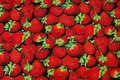Cotton-jersey with beautiful strawberries in digital-print