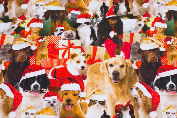 Gifts and christmas-dogs on jersey