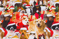 Gifts and christmas-dogs on jersey.