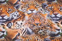 Cotton-jersey with cheetas