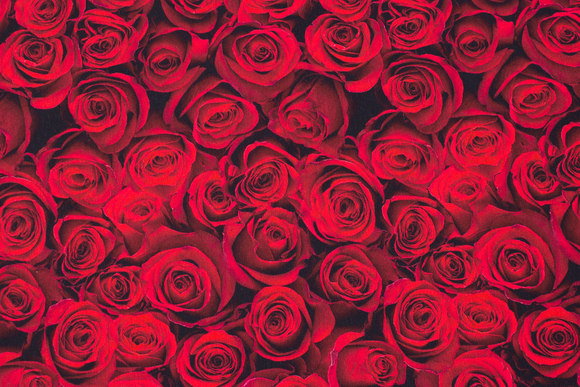 Cotton-jersey with lots of red roses