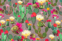 Grey-brown cotton-jersey with cactusses