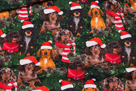 Cotton-jersey with cute elf-dogs