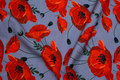 Grey cotton-jersey with beautiful red poppies
