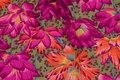 Beautiful cotton from rowan with big flowers in fuchsia and orange.