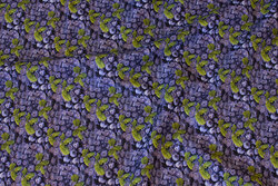 Cotton-poplin with ca. 1 cm blueberries