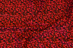 Cotton-poplin with ca. 1 cm cherries