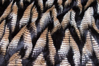 Beautiful, black luxury fur with pheasant-look