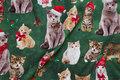 Cats are ca. 3-7 cm.