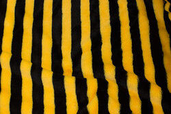 Supersoft micro-teddy, across-striped in black and yellow