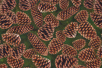 Dark green cotton-jersey with cones